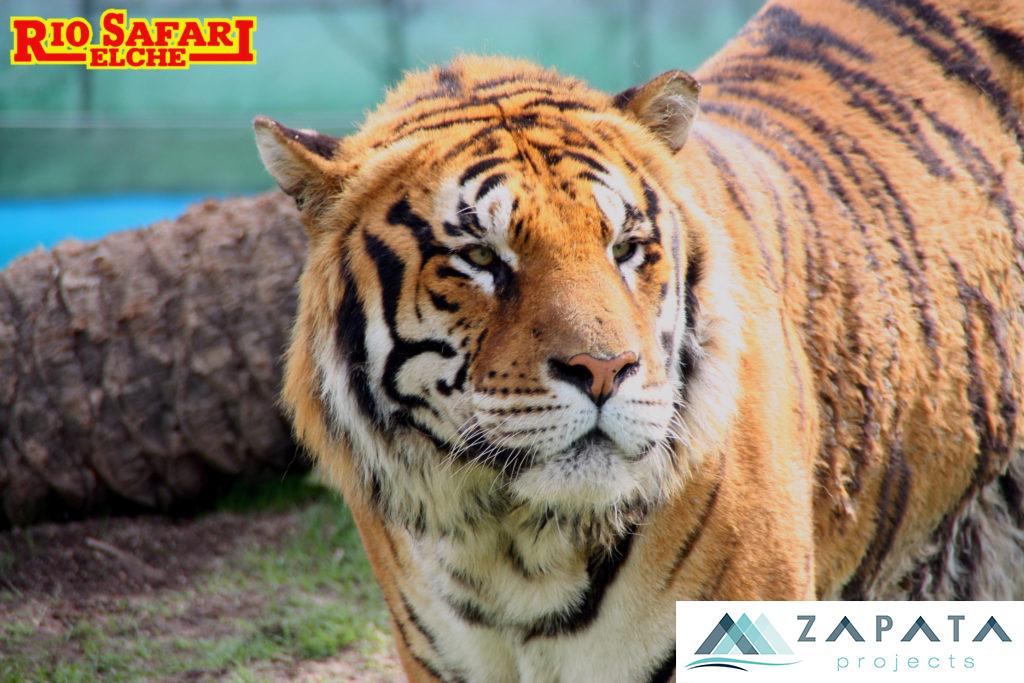 Rio Safari Elche-Zoologico-Parque Acuatico-Promociones Zapata (3)