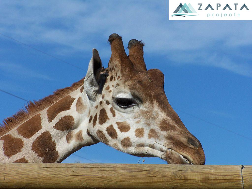 Terra Natura Murcia-Parques Acuaticos-Zoologico-Promociones Zapata (3)