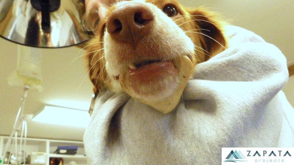 veterinarios-servicios-pilar de la horadada-promociones zapata